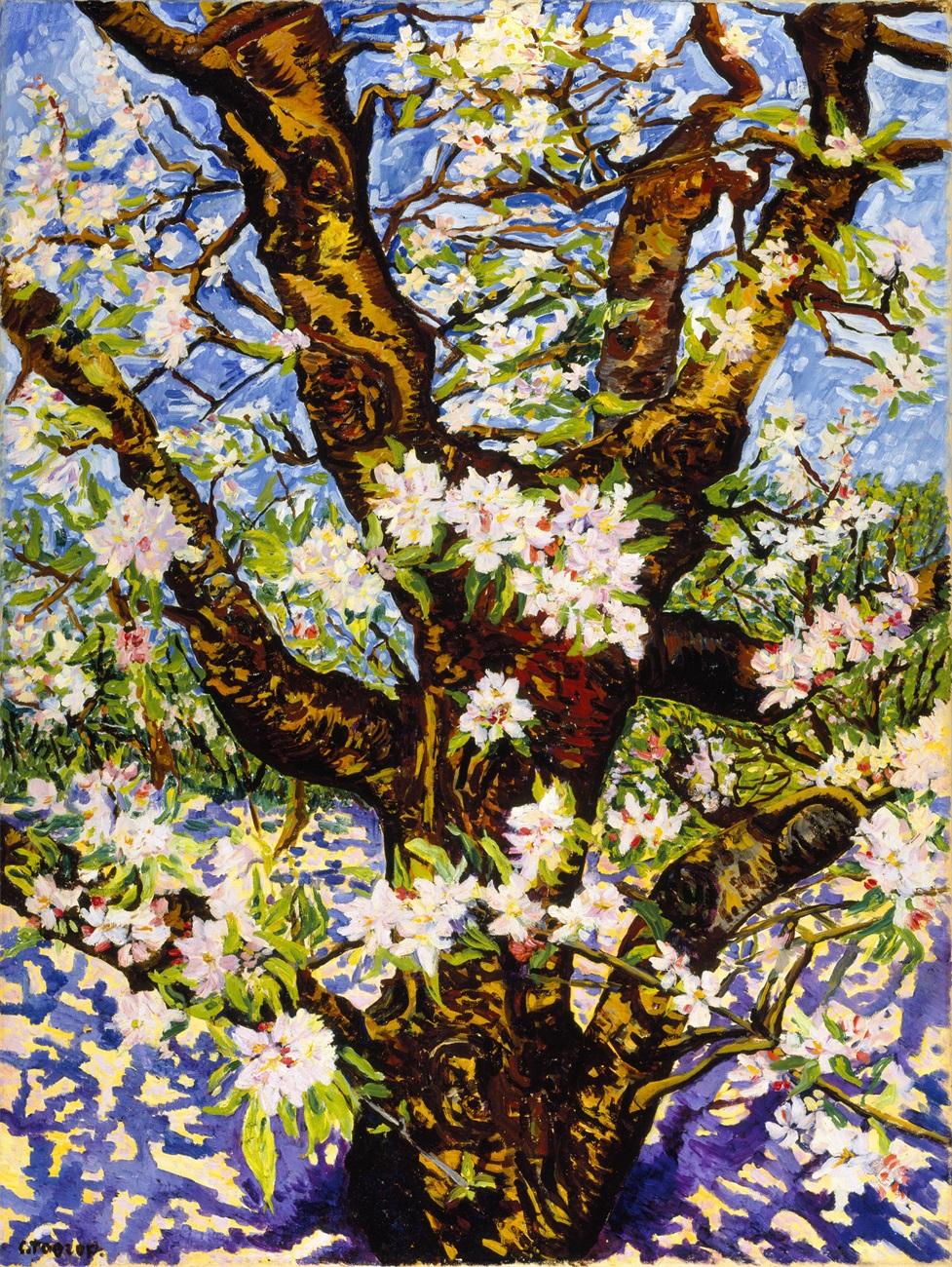 花朵盛放的老苹果树